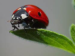 good-bug